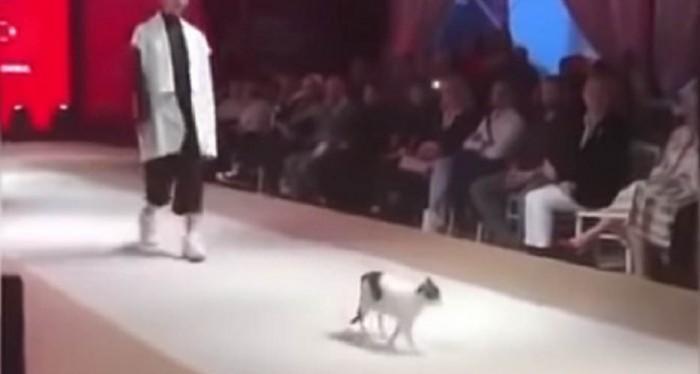 قطة تقتحم عرض أزياء